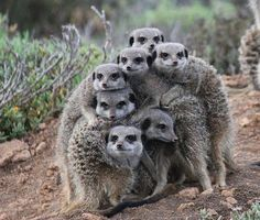 Safari Ostrich Farm is a working ostrich farm in Oudtshoorn which offers ostrich farm tours, restaurant & shopping in the Garden Route, South Africa. Cute Wild Animals, Animals Beautiful, Funny Animals, Nature Animals, Animals And Pets, Baby Animals, Animals Tattoo, Pet Day, Funny Birds