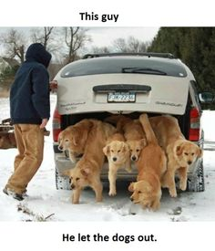 LOL! Look at all of those sweet goldens!
