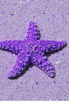 Purpura!
