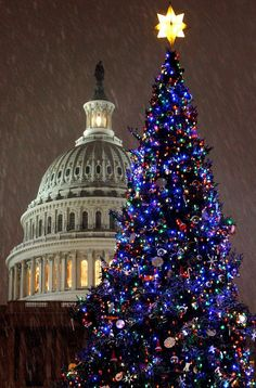 Christmas Traditions: the other Washington Christmas Tree is the Capitol Christmas Tree which has been an American tradition since Each year it is lit by the Speaker of the House & in 2012 the tree was from the White River National Forest in Colorado. Christmas In The City, Beautiful Christmas Trees, Noel Christmas, Winter Christmas, All Things Christmas, Trees Beautiful, Led Christmas Lights, Christmas Decorations, Tree Decorations