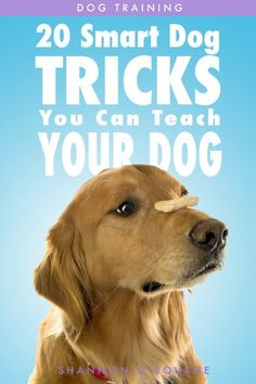 """Read """"Dog Training: 20 Smart Dog Tricks You Can Teach Your Dog"""" by Shannon O'Bourne available from Rakuten Kobo. Impress people with the smart dog tricks YOUR dog can do Want your dog to balance items on his or her nose? Training Your Puppy, Brain Training, Dog Training Tips, Potty Training, Dog Minding, Easiest Dogs To Train, Dog Books, Old Dogs, Dog Behavior"""