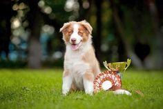 Аджилити для собак: игра, за которую положен приз Смотри больше http://kot-pes.com/adzhiliti-dlya-sobak/