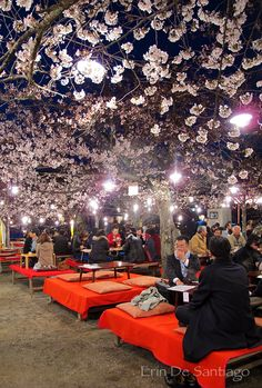 Maruyama Park, Kyoto, Japan ... huge sakura festival....pure awesomeness