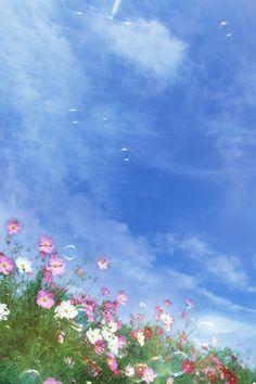 nature flowers iPhone wallpaper