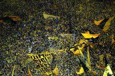 /Borussia-Dortmund-v-Real-Madrid-UEFA-Champions-League-Semi-Final-First-Leg- FANS