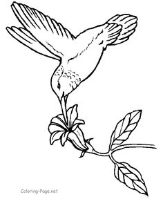 Hummingbird at flower coloring page