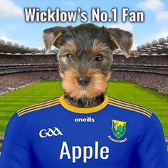 Fantastic gift for any GAA fan. This one is the Wicklow GAA fan pet portrait. Your pet in the Wicklow GAA team kit. Design online - add your own photo and text. Framed ceramic art. Croke Park, Picture Stand, English Premier League, Female Portrait, Pet Portraits, Ceramic Art, Your Pet, Pop Culture, Colours