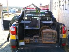Homem é preso por manter pássaros silvestres em cativeiro em Curral de Dentro, no Norte de Minas