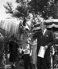 1957 Photo: Walt Disney and a Haberdashed Horse at Disneyland Park