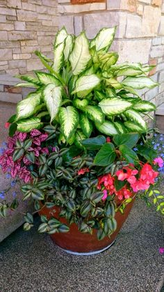 Look for a tall Areca Palm, Ferns, or Hosta, Pansies and Creeping Jenny... polka dot plant for contrast