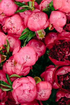 Ideas for flowers arrangements red peonies Amazing Flowers, Pink Flowers, Beautiful Flowers, Exotic Flowers, Fresh Flowers, Purple Roses, Red Peonies, Blush Peonies, Bloom