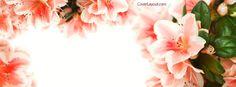 Peach Blossoms Facebook Cover CoverLayout.com