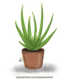 Aloa Vera, Plant Painting, Cactus Plants, Aloe, Planter Pots, Diy Projects, Landscape, Garden, Instagram