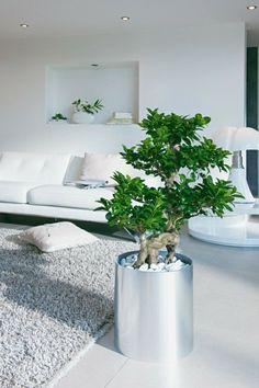 aménager-son-salon-plante-verte-pièce-blanche-éclairage-tapis-fausse-fourrure-canapé-blanc