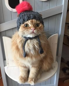 My cat wouldn't sit with a hat on long enough for me to take a photo...I love this cat! Looks cool with the hat too..
