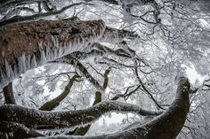 Trees covered in snow on the summit plateau of the Grosser Feldberg mountain, the highest in the Taunus range, in Hesse, Germany // Photograph: Frank Rumpenhorst/EPA