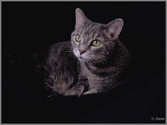 #Portrait of my Cat  Like,Repin,Share, Thanks!