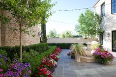 Tailored landscape - broadleaf evergreen paired with lower height broadleaf evergreen boxwoods Trees are hawthorns