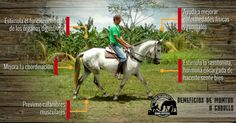 Algunos beneficios de montar a caballo Equestrian, Horses, Nature, Animals, Naturaleza, Animales, Animaux, Horseback Riding, Horse
