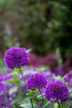If you're looking for lovely flowers that start with W then you should take a look at these 21 wonderful blooms that'll be perfect for any occasion! Luxury Garden Furniture, Meteor Garden 2018, Vegetable Garden Design, Home Landscaping, Diy Planters, Growing Flowers, Garden Styles, Beautiful Gardens, Landscape