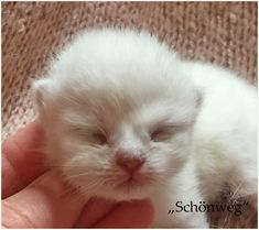 the star is born ! Adorable Animals, Cute Cats, Cats And Kittens, Stars, Pretty Cats, Sterne, Cats, Star