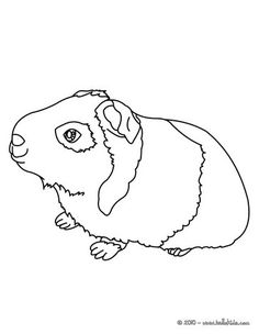 Cute Guinea Pig coloring page we used this to create a