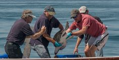 Adorable baby great white shark gets our vote for human-shark peace