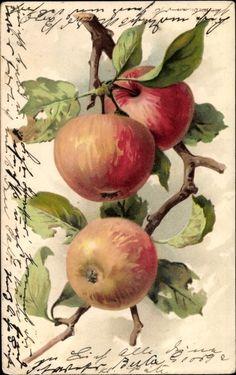 Embossed Chromo-Litho Klein, Catharina?, Reife Äpfel am Zweig