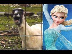 Let It Go - Goat Version _ Disney Frozen (Edition)