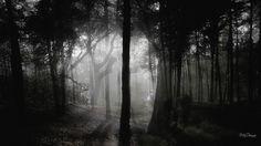 Dark Forest Wallpapers >