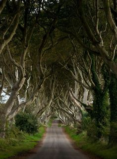Dark Hedges is a beautiful corridor of old trees that formed the road Bregagh near Armoy, north of Ireland.