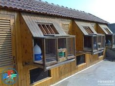 Pigeon loft design ideas and pigeon loft plan
