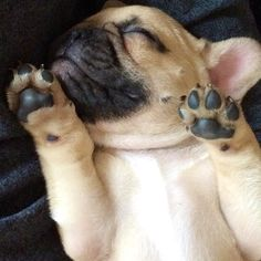 The cutest little puppy paws…