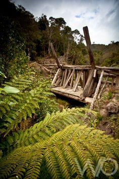 The Pinnacles – Kauaeranga Kauri Trail