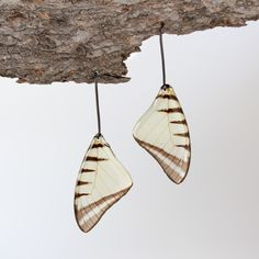 Torquatus Swallowtail Earrings, native to Peru