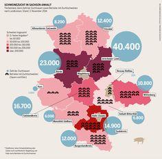 Schweinezucht in Sachsen-Anhalt: Tierbestand, darin Zahl der Zuchtsauen sowie Betriebe mit Zuchtschweinen nach Landkreisen.