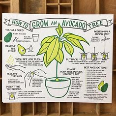 Herbs Gardening How To Grow An Avocado Tree Broadside - An letterpress poster based on our popular Lobster broadside. Printed on extra heavy Gmund Heidi recycled cover stock. Includes a great avocado toast recipe! Organic Gardening, Gardening Tips, Gardening Books, Pallet Gardening, Urban Gardening, Hydroponic Gardening, Garden Plants, House Plants, Plants Indoor