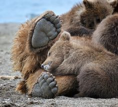 Look at those feet!