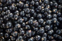 Blackcurrant closeup