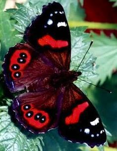 Butterfly via Carol's Country Sunshine on Facebook