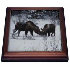 3dRose Moose Cow and Calf Eating Winter Branches in the Snowy Field 1, Trivet with Ceramic Tile, 8 by 8-inch