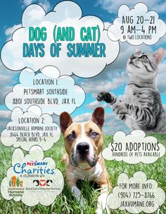 19 Best Dog Cat Adoption Promos Images Dog Cat Humane Society