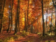 HDR Autumn Forest