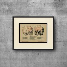Human Skull Art Print, Gall's Phrenology C.1895 Antique Engraving - Medical…