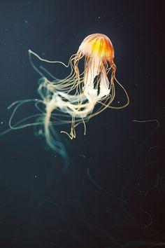 Sea life                                                                                                                                                     Plus