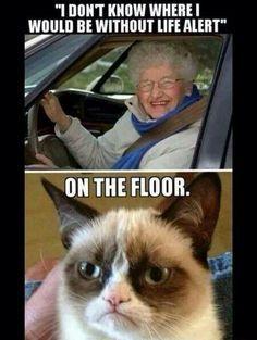 grumpy cat school - Google Search