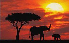 My favorite animal!  Google Image Result for http://i.dailymail.co.uk/i/pix/tm/2007/09/masai1DM_428x269_to_468x312.jpg