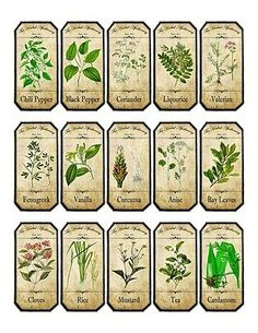 Vintage inspired assorted herb spice food tea bottle jar labels stickers