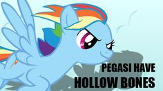 MLP Headcanons - Like bird, Pegasi have hollow bones so they weigh less, aiding their ability to fly.