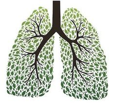 The 9 Best Herbs for Lung Cleansing and Respiratory Support // from Wake Up World